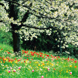 Estações Primavera