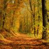 Estações Outono