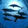 Mundo subaquático
